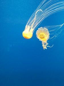 yellow jelly 2