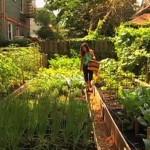 A Backyard Farming Network in Brooklyn