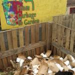 2011 NES Luncheon Compost